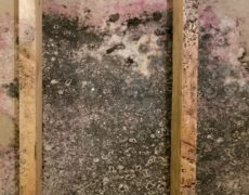Mold Causing Damage